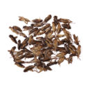 Dehydrated Acheta Domestica Crickets (25) 500Gr2